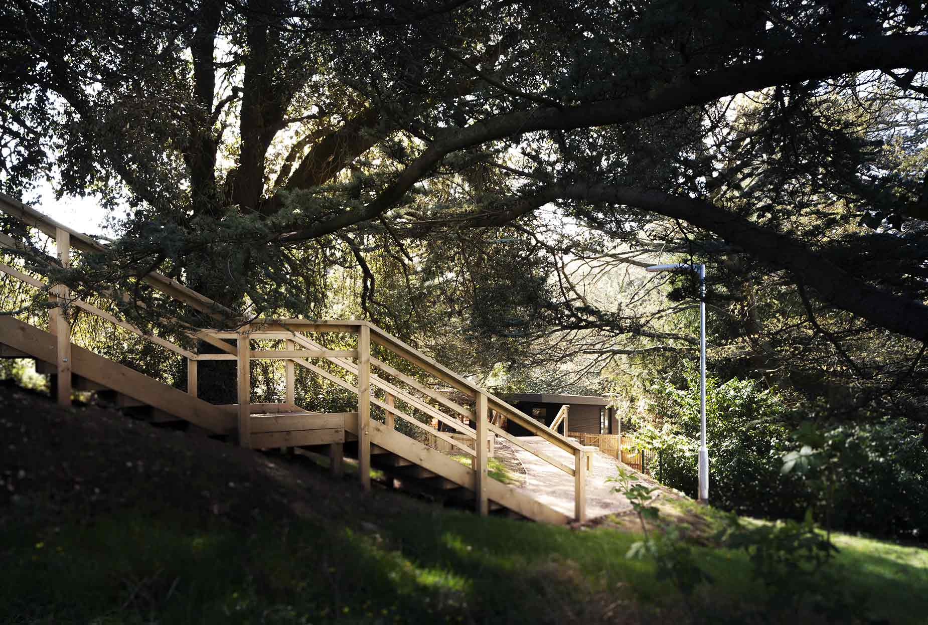 Wooden steps underneath large trees